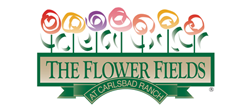 The Flower Fields in Carlsbad featured OurIndianCulture.com organization in Irvine